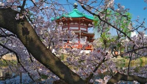 Japanese Cherry Blossom, Beautiful Ueno Park In Tokyo Japan Travel | asia holidays destination picture | Beauty building, park, and city in asia | Scoop.it