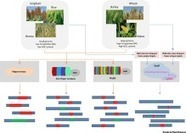 Characteristics of Genome Editing Mutations in Cereal Crops - Trends Plant Sci | SEED DEV LAB Biblio | Scoop.it