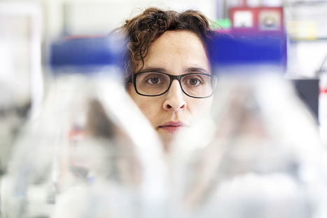 Cientista portuguesa retira artigo após acusação de manipulação de imagens | Comunicação Científica | Scoop.it