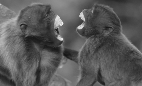 Sign of empathy: These monkeys mimic faces | Empathy and Animals | Scoop.it
