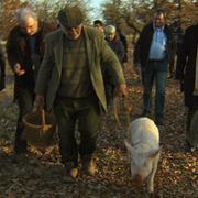 Pour un panier de truffes - Le Figaro | dordogne - perigord | Scoop.it