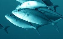 Découvrir les océans - Ifremer | Learning | Scoop.it