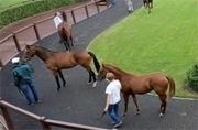 La France hors la loi pour la TVA sur les chevaux de course | Trotting club | Scoop.it
