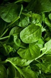 Amy's Kitchen recalls frozen food over possible listeria-tainted spinach - Washington Post | GMOs & FOOD, WATER & SOIL MATTERS | Scoop.it