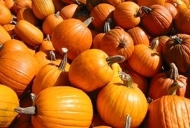 Changing Weather Hurts Ohio Pumpkin Crop | Agriculture news | Scoop.it