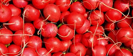 Le radis, cocktail détonnant de vitamines et oligo-éléments - Page 2 sur 2 | emploi finances assurance | Scoop.it
