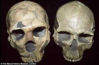 Τέχνης Σύμπαν και Φιλολογία: Τα μεγάλα μάτια ίσως οδήγησαν τους Νεάντερταλ στην εξαφάνιση, How big bodies and sharp eyes killed off the Neanderthals : Scientists say traits 'left them without the m... | Τέχνης Σύμπαν και Φιλολογία | Scoop.it