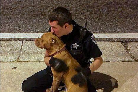 Poliziotto coccola pitbull abbandonato e ferito, fino all'arrivo dei soccorsi | My Pet's Hero | Scoop.it