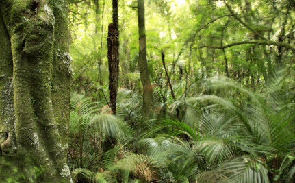 10 Incredible Plant Facts You Didn't Know | Silviculture and Forest News | Scoop.it