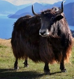 Díasyclasemarisolhuerta: ANIMALES MAMÍFEROS | El reino animal U.E.F. Fray B. de las Casas S. | Scoop.it