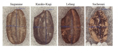 Every grain of rice: Ancient rice DNA data provides new view of domestication history | Fragments of Science | Scoop.it