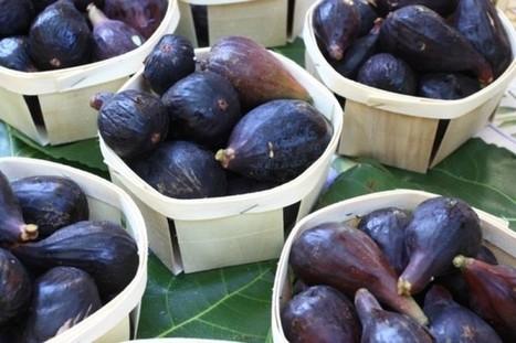 La figuerie du Paty à Caromb : un conservatoire unique dédié à la figue… - Savourez la Provence | recettes de cuisine de campagne | Scoop.it