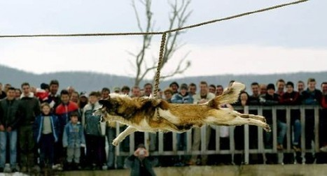 Bizarre Dog-Spinning Ritual Believed to Ward off Rabies | Strange days indeed... | Scoop.it