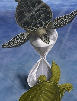 Genomic analysis solves the turtle mystery - Research Highlights - RIKEN RESEARCH | Plant Gene Seeker -PGS | Scoop.it