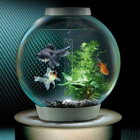 Beautiful Fish Tank for sale   Free Indian Classifieds           www.openfreeads.com   Scoop.it