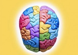 Biology and Behaviour in Psychology - About Psychology Degrees   Psychology Matters   Scoop.it