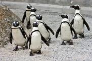 Enciclopedias sobre medio ambiente en Internet | CienciaHoy | Scoop.it