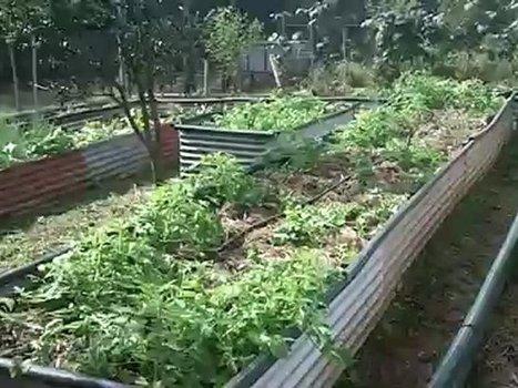Video permaculture d couvrez un jardi for Jardin urbain permaculture