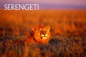 The official site of the Tanzania National Parks - Serengeti National Park | GEO 152 | Scoop.it