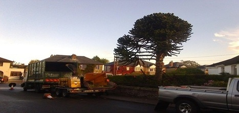 Dublin Tree services|Tree care|Tree surgery | Abatis Dublin Tree Services | Landscape gardening | Scoop.it