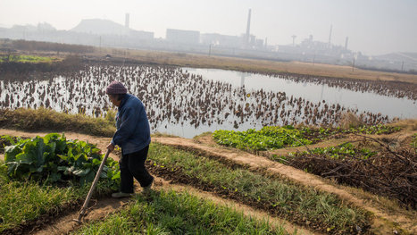 Pollution Rising, Chinese Fear for Soil and Food | China Pollution Awareness Network | Scoop.it