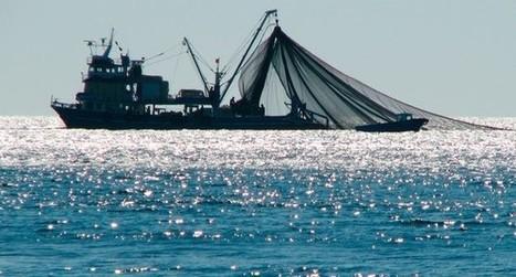 Scientists propose #highSeas fishing moratorium ~ see @CaptPaulWatson's view below...   Epicurist: In Victus Veritas   Scoop.it