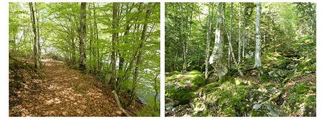 Forêts montagnardes | Bio3D | Scoop.it