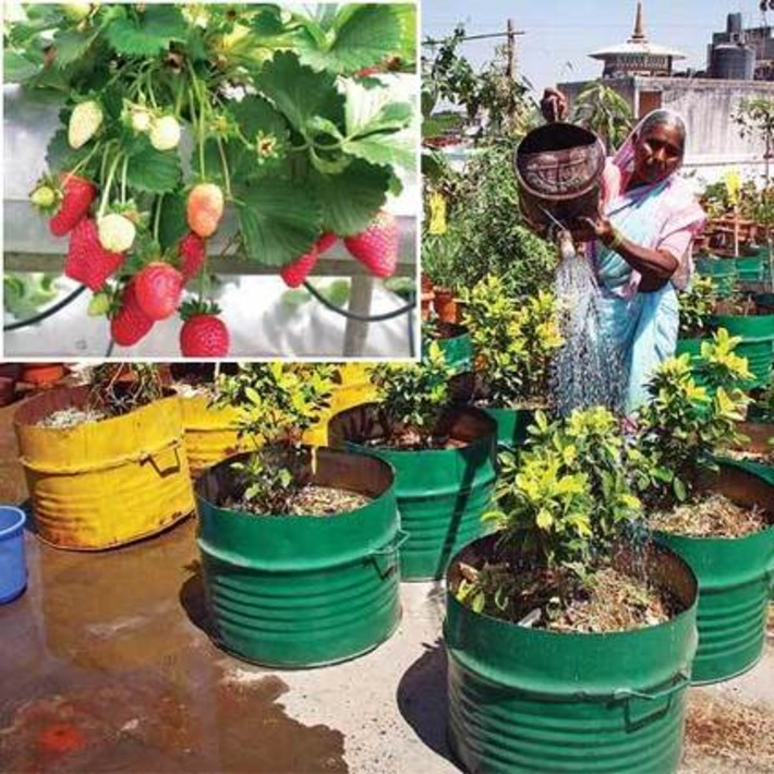 Strawberry fields on my terrace - Lifestyle -  dna | Container Gardening | Scoop.it