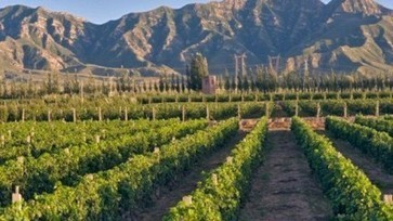 China will import less over the next four years: Vinexpo research | Vitabella Wine Daily Gossip | Scoop.it
