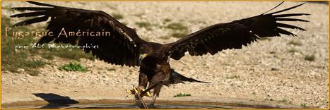 Le rocher des Aigles - ALC Photographies ! | Nature & Civilization | Scoop.it