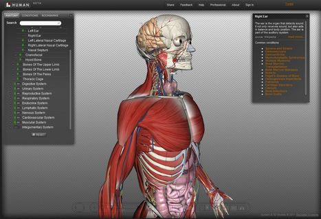 Biodigital Human: explorar el cuerpo humano en 3D | eSalud Social Media | Scoop.it