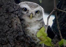 Wildlife group wants curbs on owl trade | Wildlife Trafficking: Who Does it? Allows it? | Scoop.it
