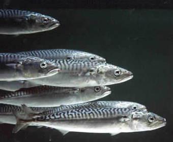Stagionalità del pesce: i pesci di stagione in Primavera | materie prime | Scoop.it