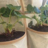 Orto appeso: piante come scarpe | Mangialafoglia | Scoop.it