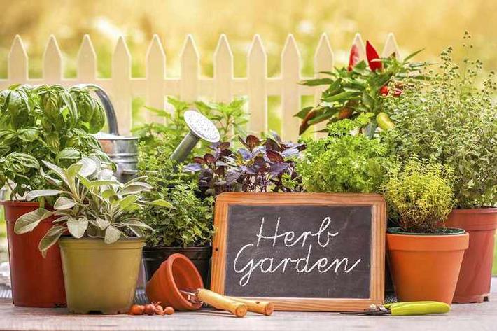 A taste of summer   Container Gardening   Scoop.it