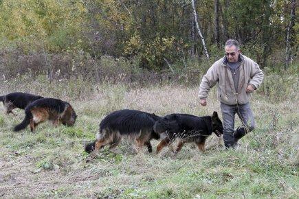 Traque des chiens errants: fini les battues - LaPresse.ca   chiens shetland   Scoop.it