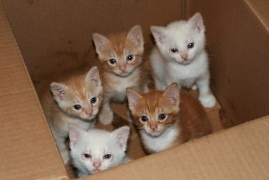 Do Kitten Mills Exist? Yes! And Here's How We Can Help Stop Them | Animals R Us | Scoop.it