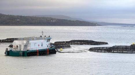 Fish farms a necessity: minister | Nova Scotia Fishing | Scoop.it