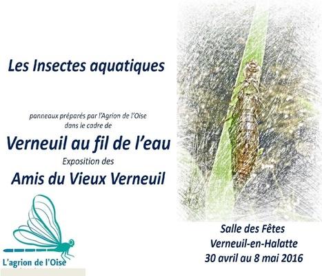 Les insectes aquatiques au fil de l'eau de Verneuil - L'Agrion de l'Oise   Variétés entomologiques   Scoop.it