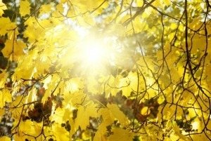 Does Vitamin D Help Depression? | Abnormal Psychology | Scoop.it