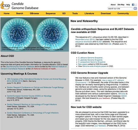 Candida Genome Database | bioinformatics-databases | Scoop.it