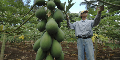 ​If You Want a Glimpse of the Future Food Wars, Look to Hawaii | leapmind | Scoop.it