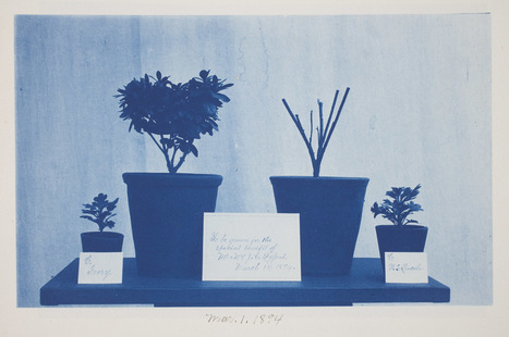 Worcester Art Museum - Cyanotypes: Photography's Blue Period | L'actualité de l'argentique | Scoop.it