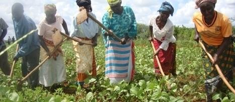 Kenyan farmers show thirst for adapting to climate change - Latest news - Farm Africa   Afrique, une terre forte et en devenir... mais secouée encore par ses vieux démons   Scoop.it