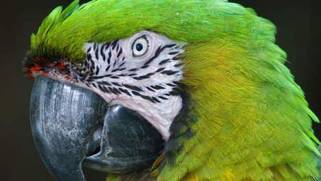 Belg ontrafelt puzzelstuk in waarnemen magneetveld door vogels ... | Tuinieren | Scoop.it