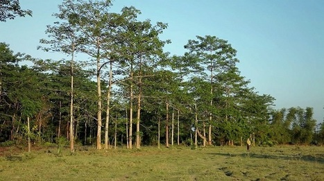 Un homme a planté une forêt pendant 30 ans, un arbre après l'autre | The Blog's Revue by OlivierSC | Scoop.it