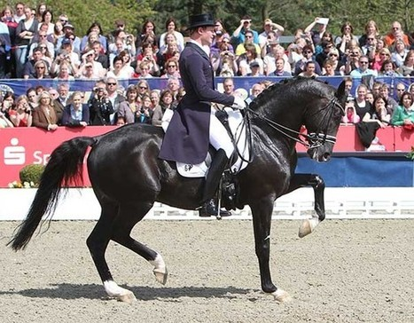 """Totilas """"Slightly Injured"""" and on Break from Training–No Decision Yet on 2013 Competitions -- Dressage News 