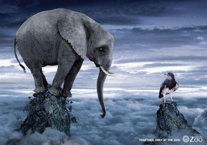 Advertising Break: Un' iniziativa per dire no agli zoo.   Social Media Consultant 2012   Scoop.it