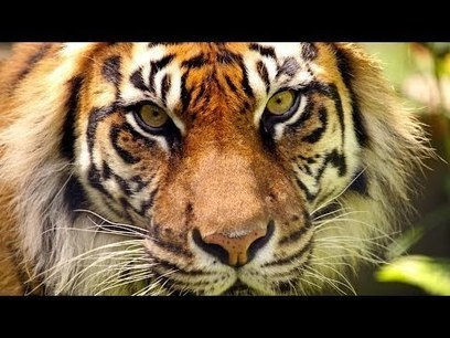 10 Animals That May Go Extinct In The Next 10 Years | My favorite videos | Scoop.it