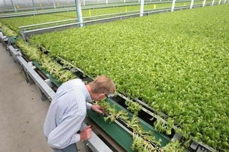 Hydroponics operation takes root in Mass. | Boston Globe | CALS in the News | Scoop.it
